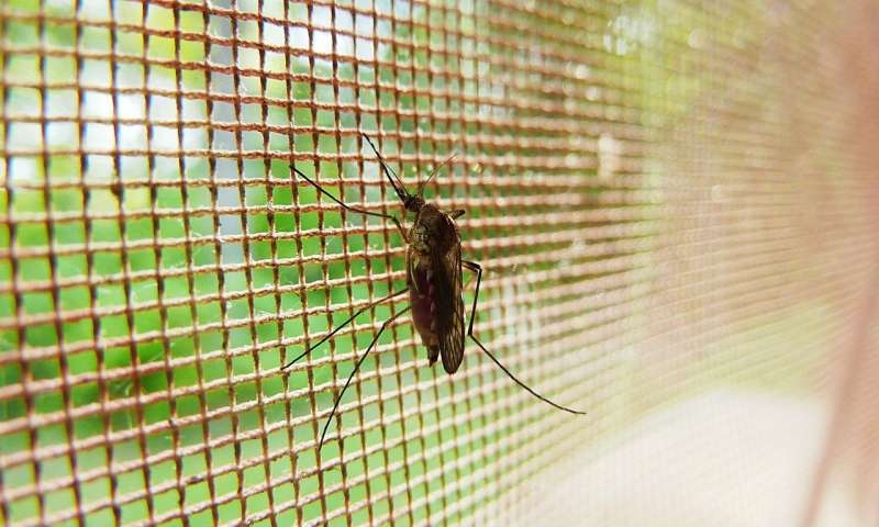 Diabetes and obesity risk factors for severe malaria